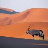 Saxoryxs Avatar